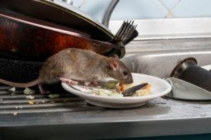 Nahrungsquellen beseitigen